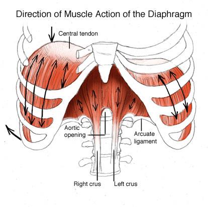 Origin of the word anatomy